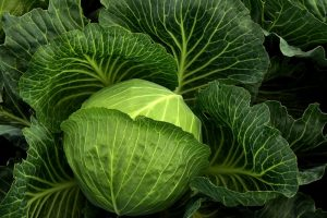 keto-cabbage-recipes
